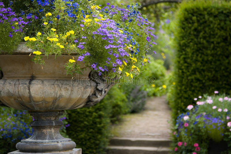 English country garden. An English country garden in summer with a variety of annual, herbaceous and woody plant, with a stone urn royalty free stock photography