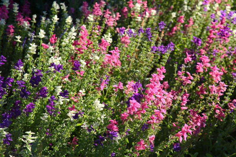 English Country Garden flowers. Backlit bright colors royalty free stock photography