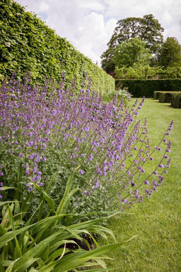 English Country Garden. A formal English country garden stock images