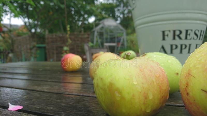Close up of wet apples on a garden table. English country garden on a wet rainy day apples dripping wooden table countryside chair green bucket greenhouse in royalty free stock images