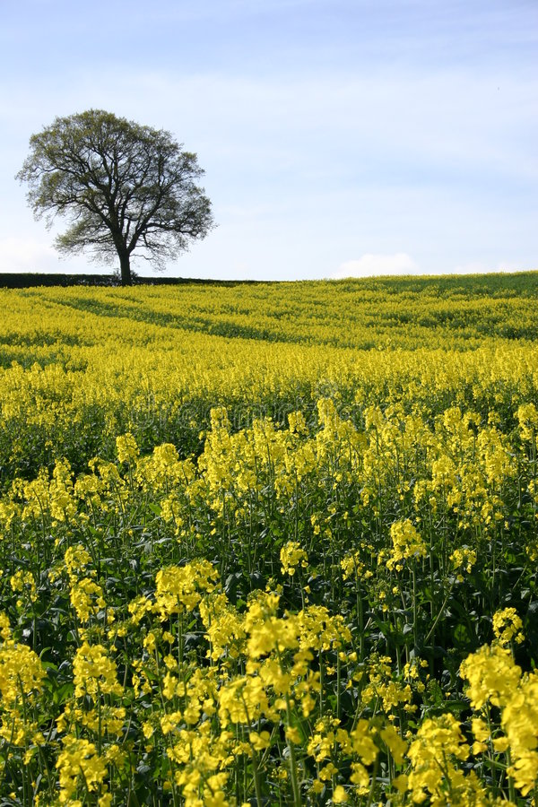 Download English Countryside stock photo. Image of spring, tree - 128412