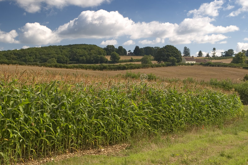 Download English Countryside Stock Images - Image: 197284