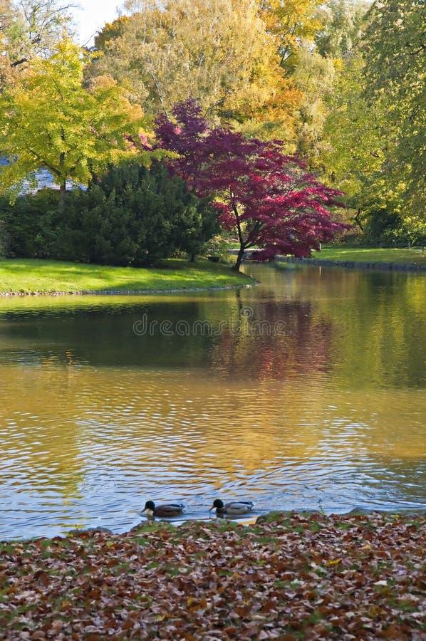 English garden, munich stock photos