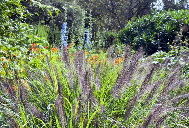 English garden with wild growing ornamental grasses, flowers . stock photo