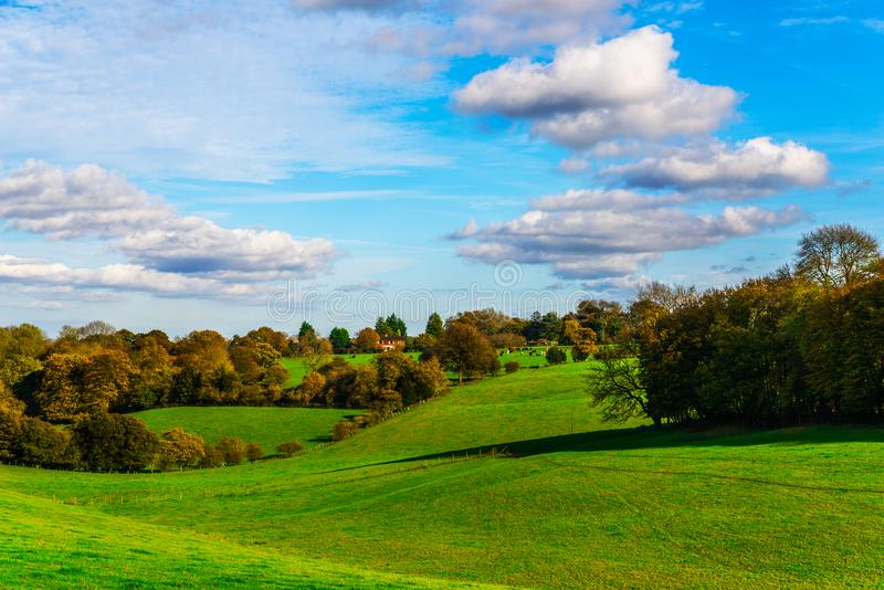 English green meadow on a sunny day, a typical rural landscape o. F the British countryside, a rural field stock photo