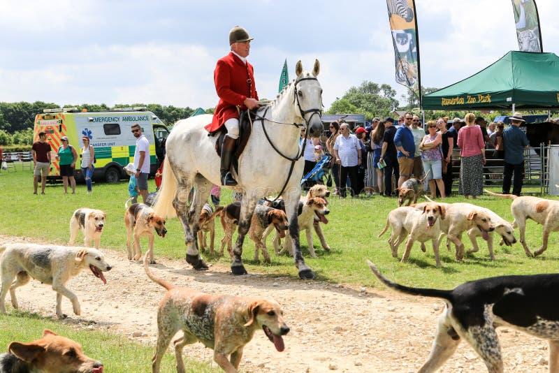 English huntsman and his hounds stock photography