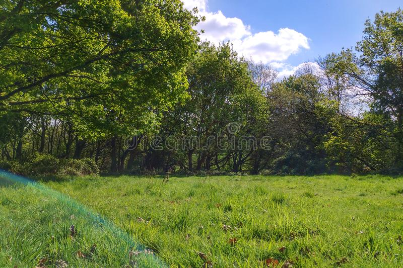 English Meadow stock images