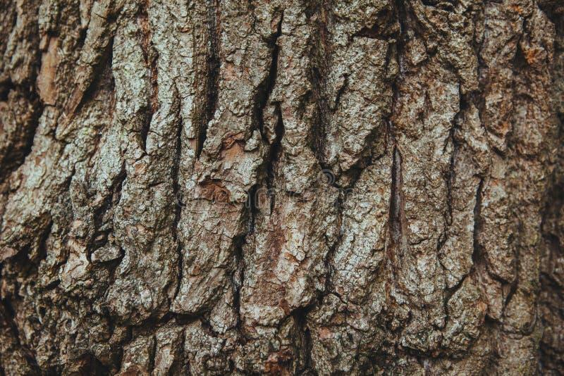 English Oak Tree Bark Background Texture Free Public Domain Cc0 Image