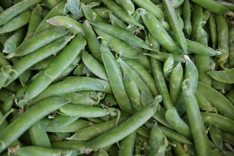 English peas. Garden peas, Pisum sativum, common peas with green plump pods with rounded seeds, shelled to remove seeds, cooked as vegetable in combination royalty free stock photos