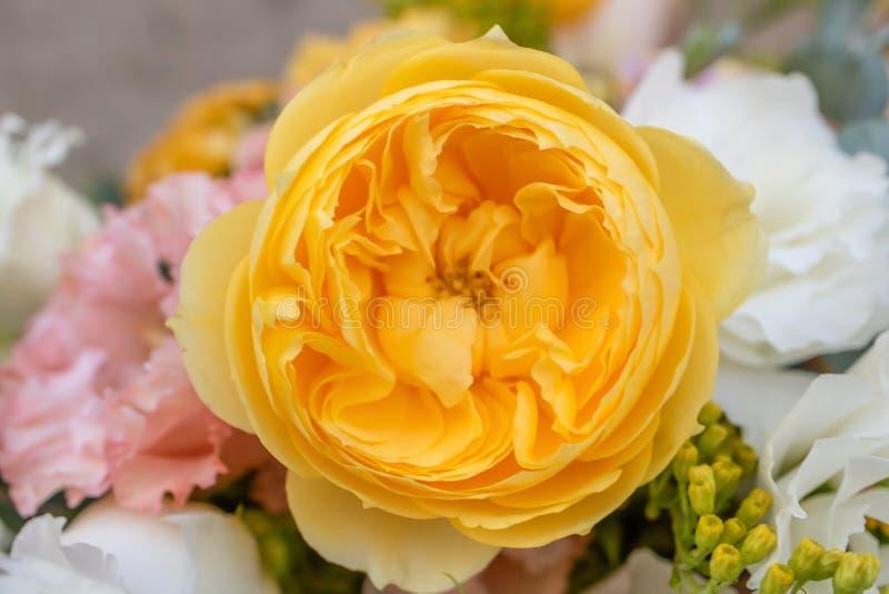 English rose David Austin, big yellow-orange roses royalty free stock photos