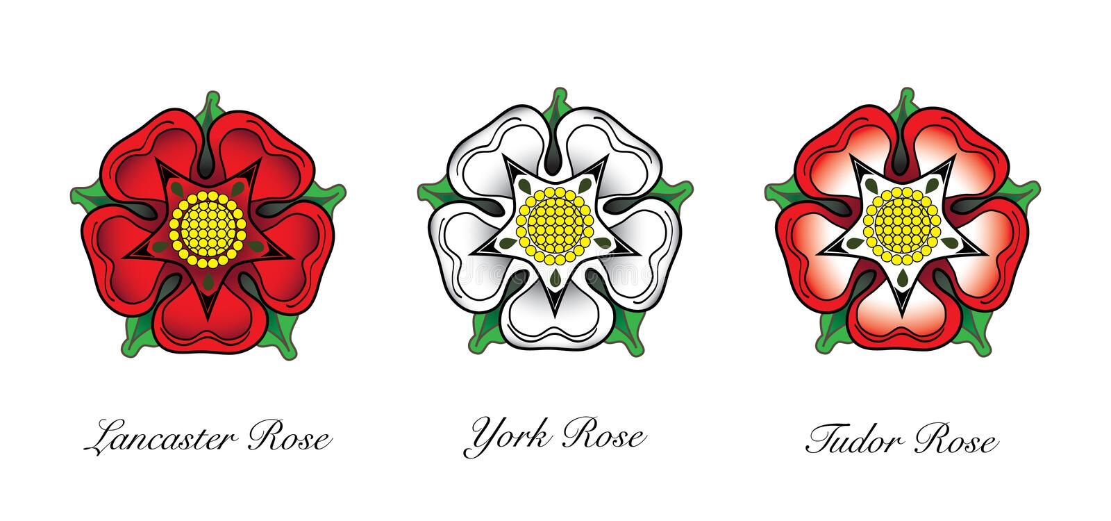 English Rose Emblem. Representaions or english Rose emlems. Following the War of the Roses, the red rose of the house of Lancaster and the White rose of the