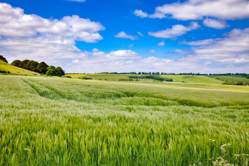 English rural landscape with barley field. English rural landscape with green barley field in Southern England UK royalty free stock images