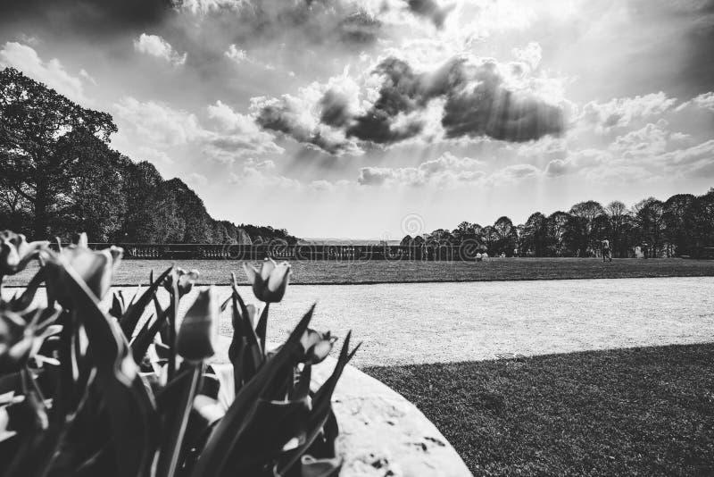 Park Landscape View Through Flowers Black and White stock photos