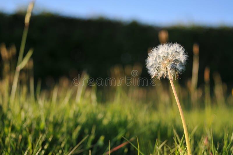 English Summer Field royalty free stock image