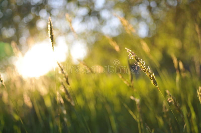 English Summer Field. Summer Field in the country side stock photography