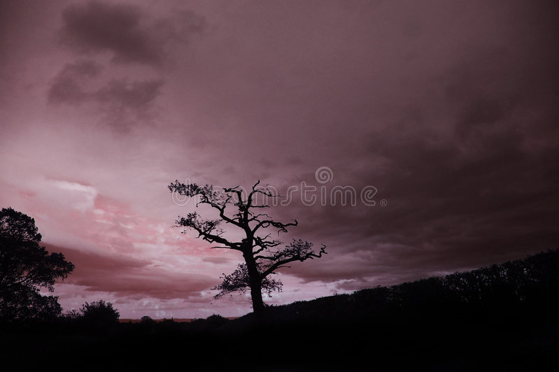 English sunset. Silhouette of a tree at sunset in the Vale of Evesham, United Kingdom royalty free stock photo