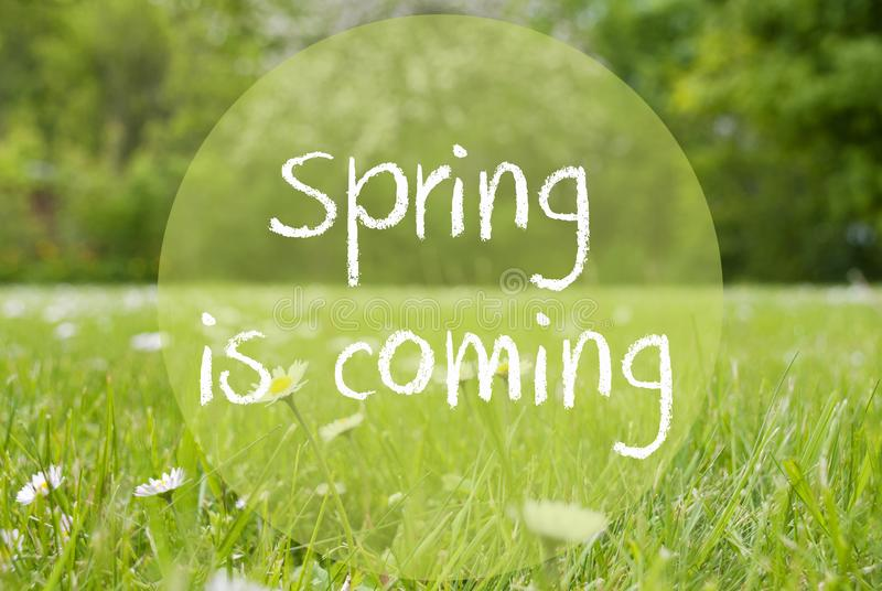 Gras Meadow, Daisy Flowers, Text Spring Is Coming royalty free stock photos