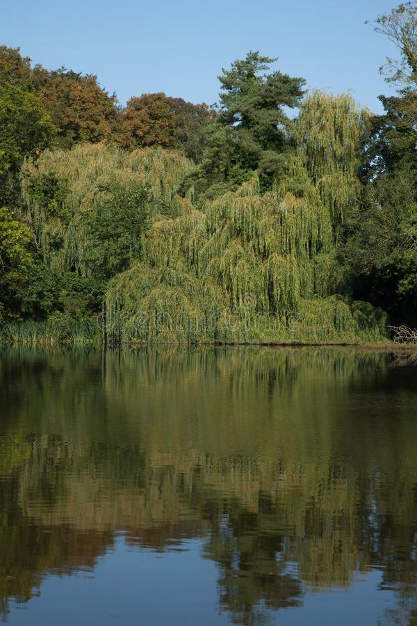 English village pond. Landscape photo of a beautiful village pond on a summers day stock image