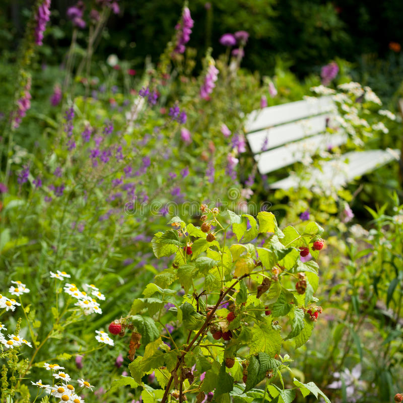 english wild garden stock photo image of nature floral 67588712. Black Bedroom Furniture Sets. Home Design Ideas