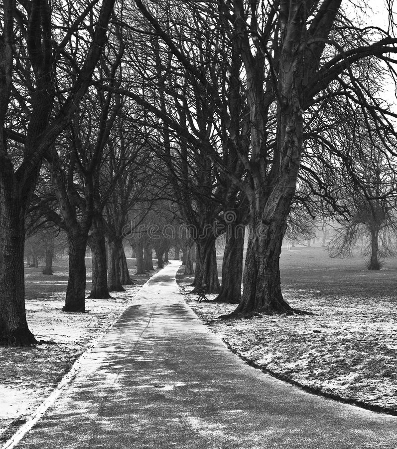 Download English winter park stock photo. Image of trees, cold - 8423216