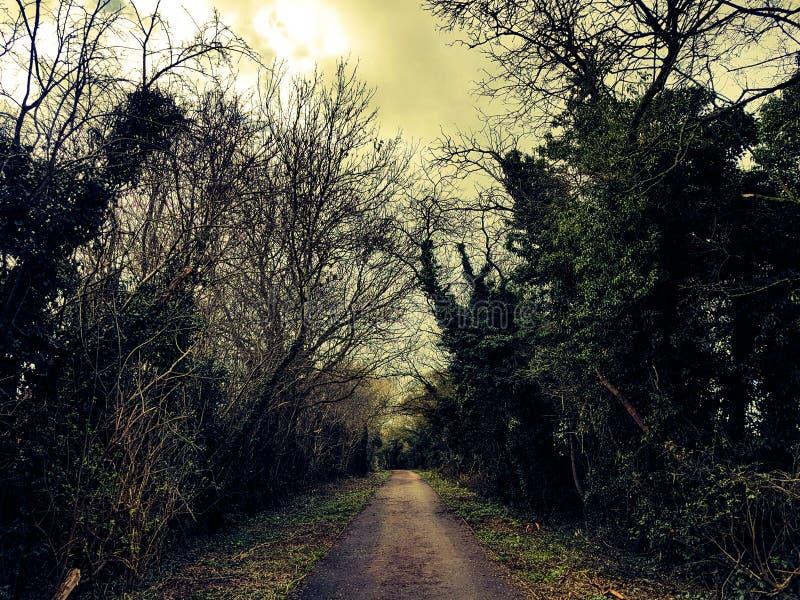 English wood pathway stock image