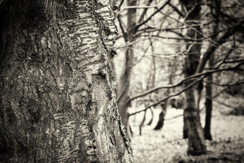 English woodland coming to life in spring. English woodland coming to life in the spring stock photography
