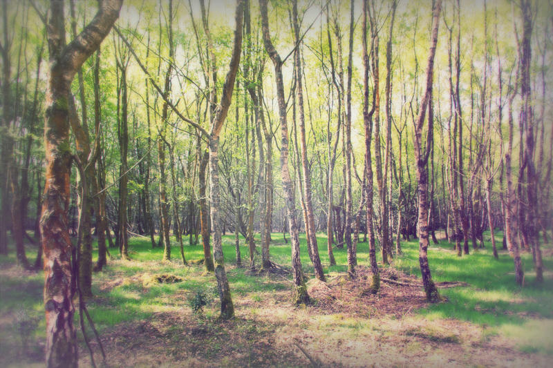 English woodland coming to life in spring. English woodland coming to life in the spring stock photo