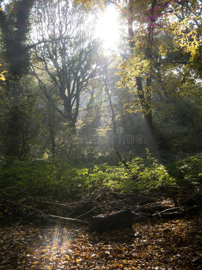 English Woodland stock images