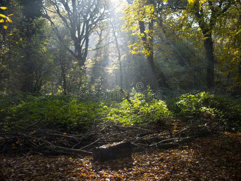 English Woodland stock image