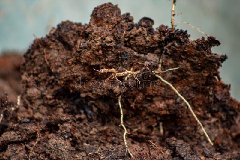Engrais : bio engrais naturel organique dans une brouette de roue La vie de ferme Fin vers le haut photographie stock libre de droits