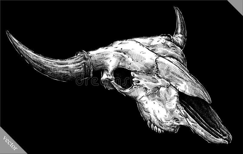 Engrave隔绝了母牛头骨手拉的图表传染媒介例证 向量例证