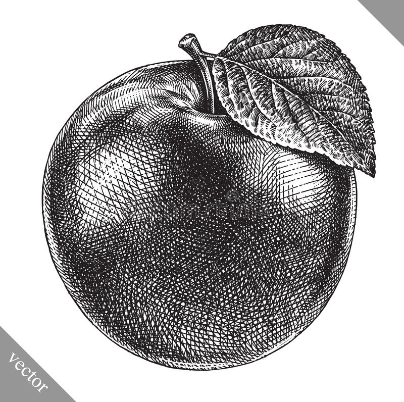 Free Engrave Isolated Apple Hand Drawn Graphic Vector Illustration Stock Image - 111718071