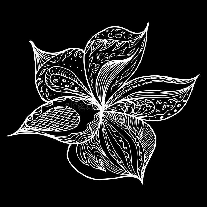 Engraved hand drawn abstract orchid. Retro flowers hand outline orchid, great design for any purposes. Outline vector. Nature royalty free illustration