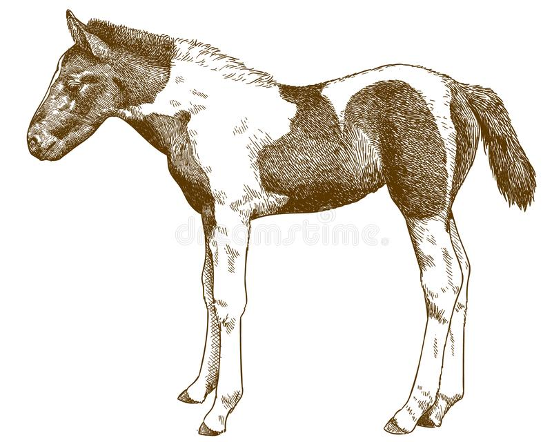 Engraving antique illustration of horse foal stock illustration
