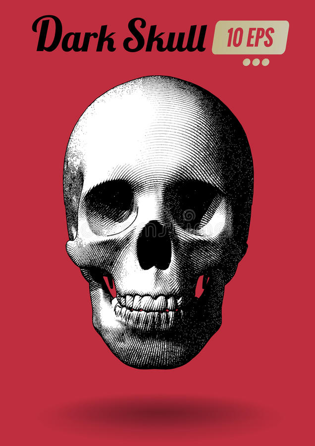 Engraving black and white skull on red BG. Engraving monochrome skull vector illustration in front view on red background stock illustration