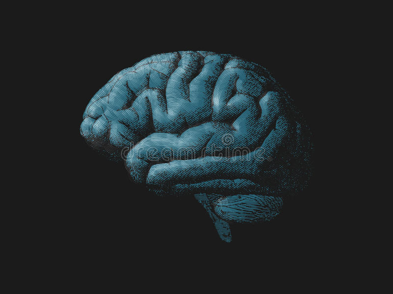 Engraving blue turquoise brain on dark BG. Engraving blue turquoise brain illustration on dark background royalty free illustration