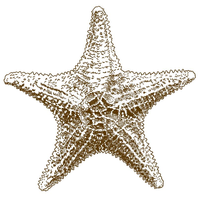 Engraving drawing illustration of hippasteria sea star royalty free illustration