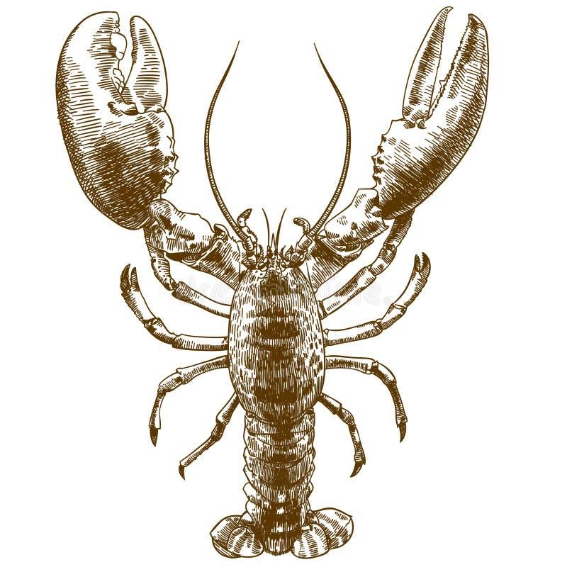 Free Engraving Drawing Illustration Of Big Lobster Royalty Free Stock Photos - 135917168