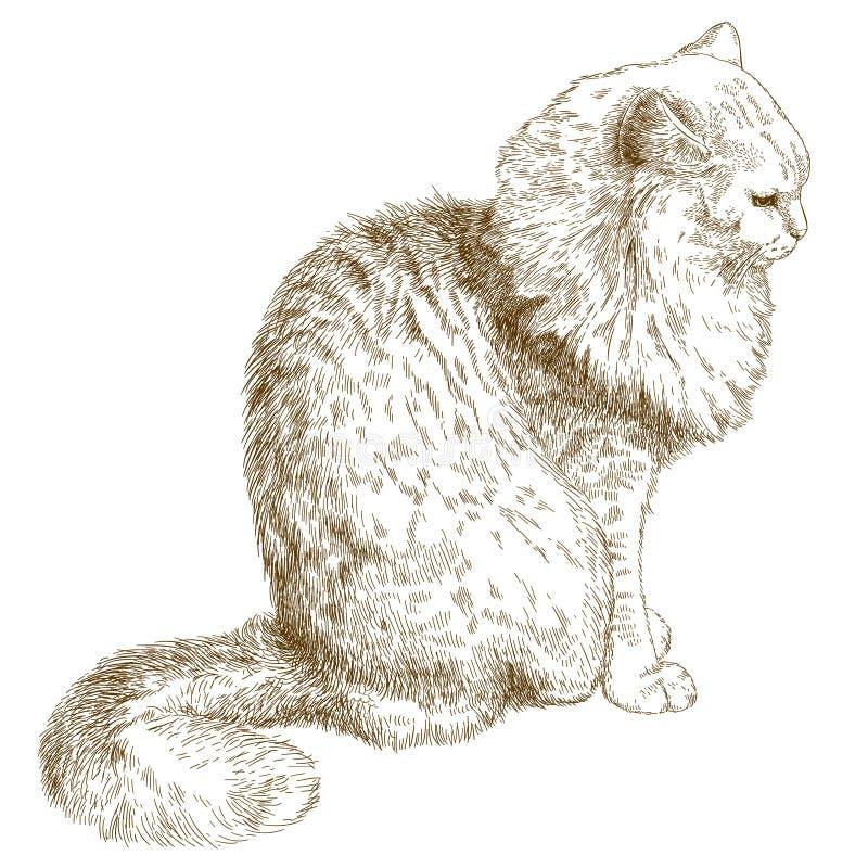 Engraving illustration of cat. Vector antique engraving illustration of cat isolated on white background vector illustration