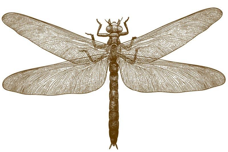 Engraving illustration of dragonfly meganeura royalty free illustration