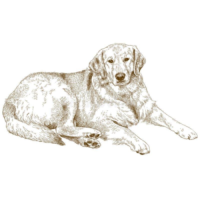 Engraving Illustration Of Labrador Stock Vector - Illustration of ...