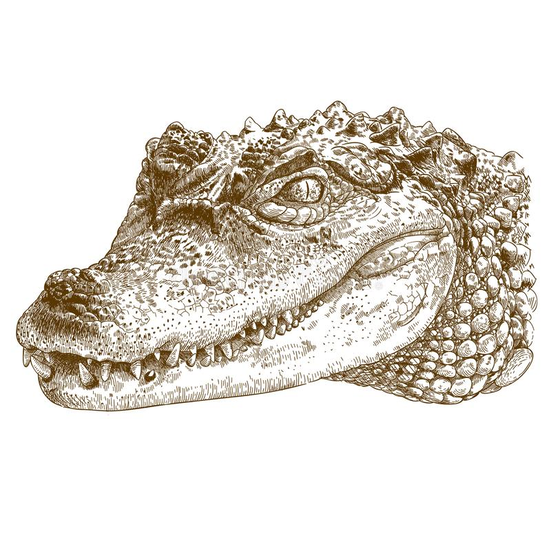 Free Engraving Illustration Of Crocodile Head Stock Photos - 107532243