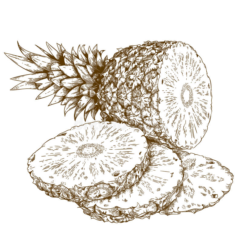 Engraving illustration of pineapple and slices. Vector antique engraving illustration of pineapple and slices isolated on white background royalty free illustration