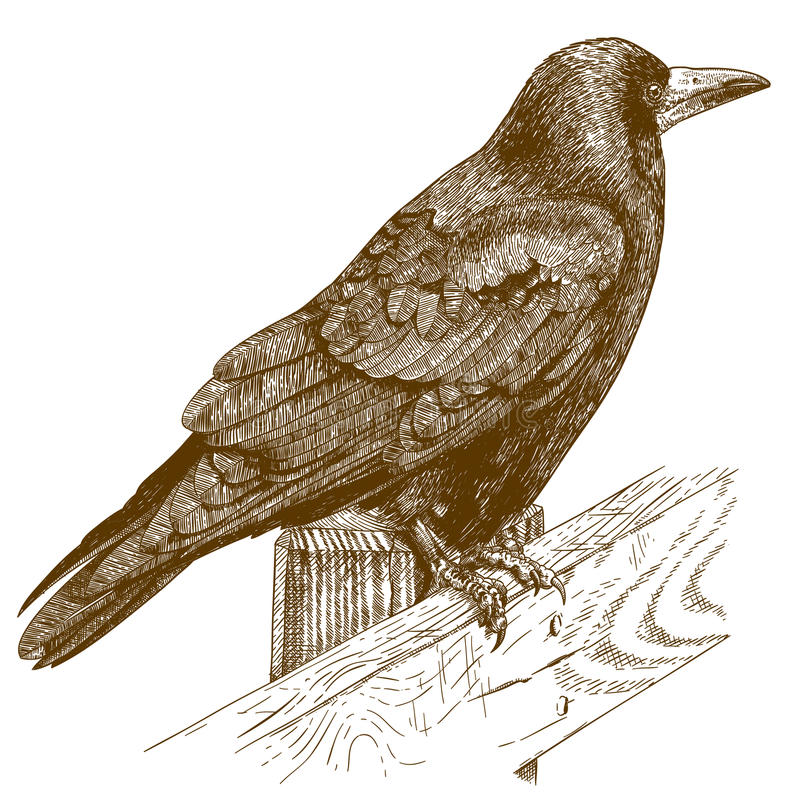 Engraving illustration of raven royalty free illustration