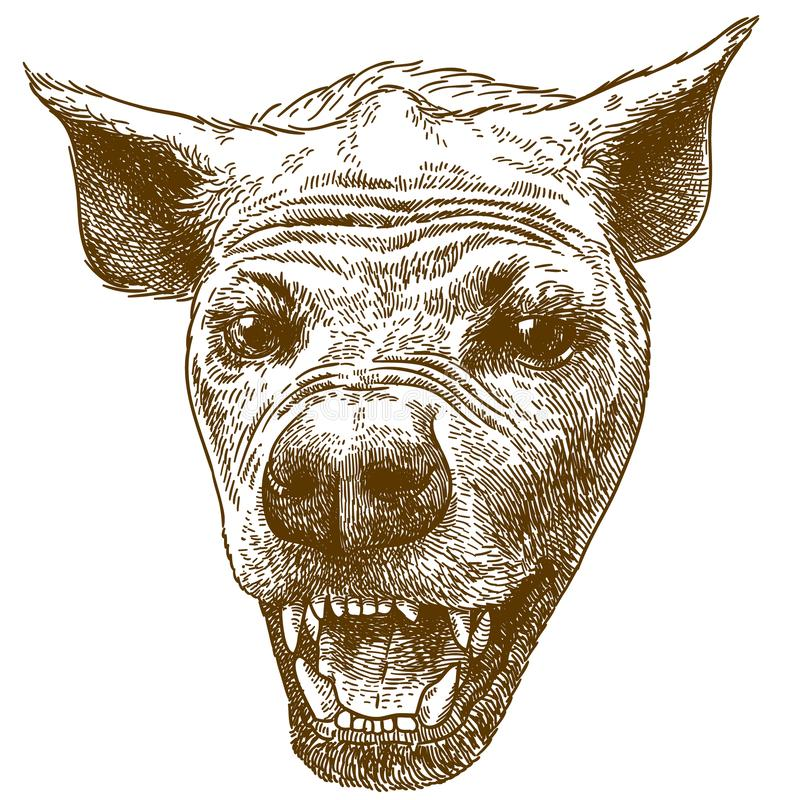 Engraving  illustration of spotted hyena head vector illustration