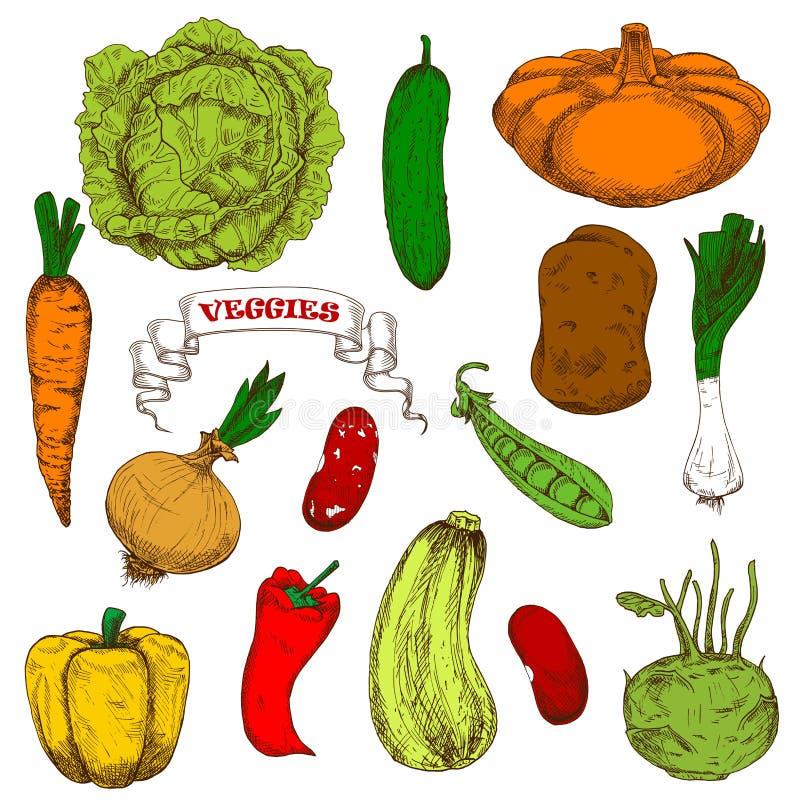 Engraving sketches of healthful organic vegetables. Healthful organic fresh carrot, onion, pumpkin pea leek cayenne pepper, beans potato cabbage bell pepper royalty free illustration