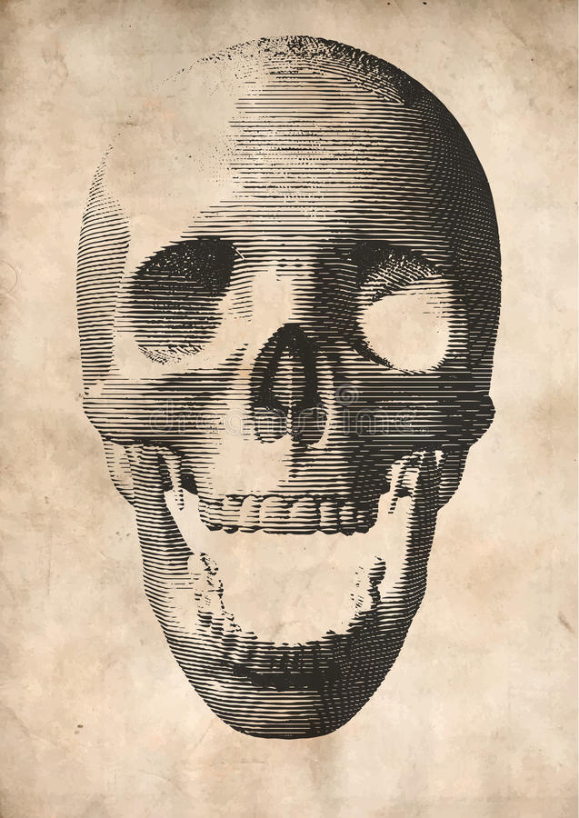 Engraving vector skull on old paper background royalty free illustration