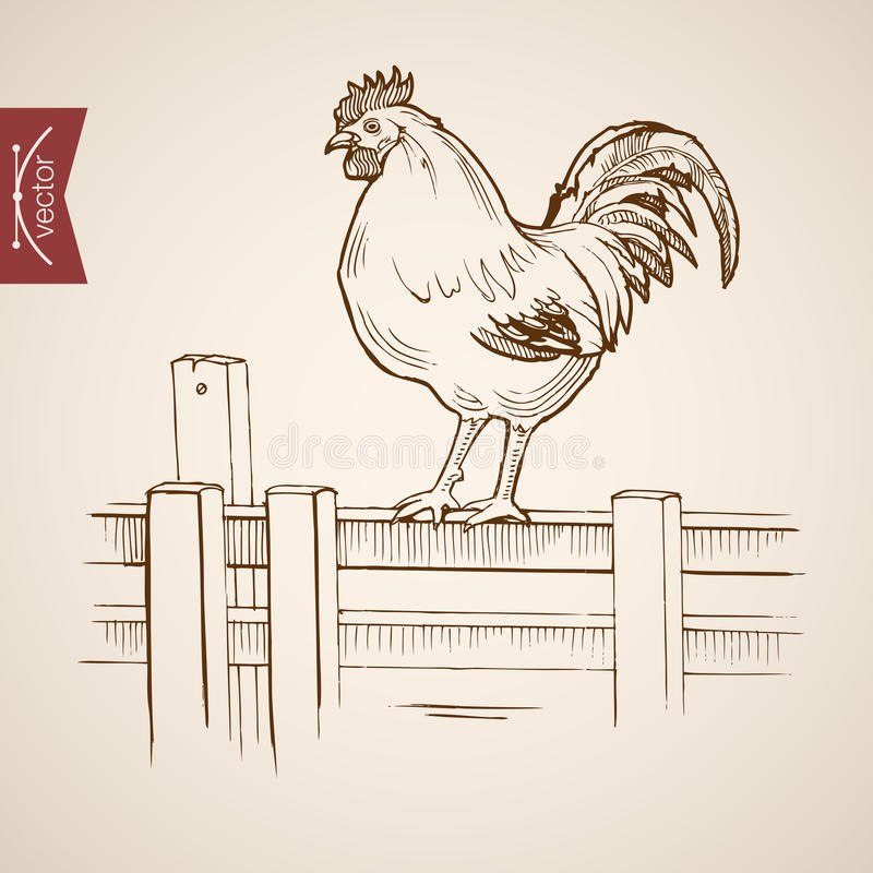 Engraving vintage hand drawn vector fence Ske. Engraving vintage hand drawn vector domestic standing on wood fence. Pencil Sketch farm bird illustration royalty free illustration