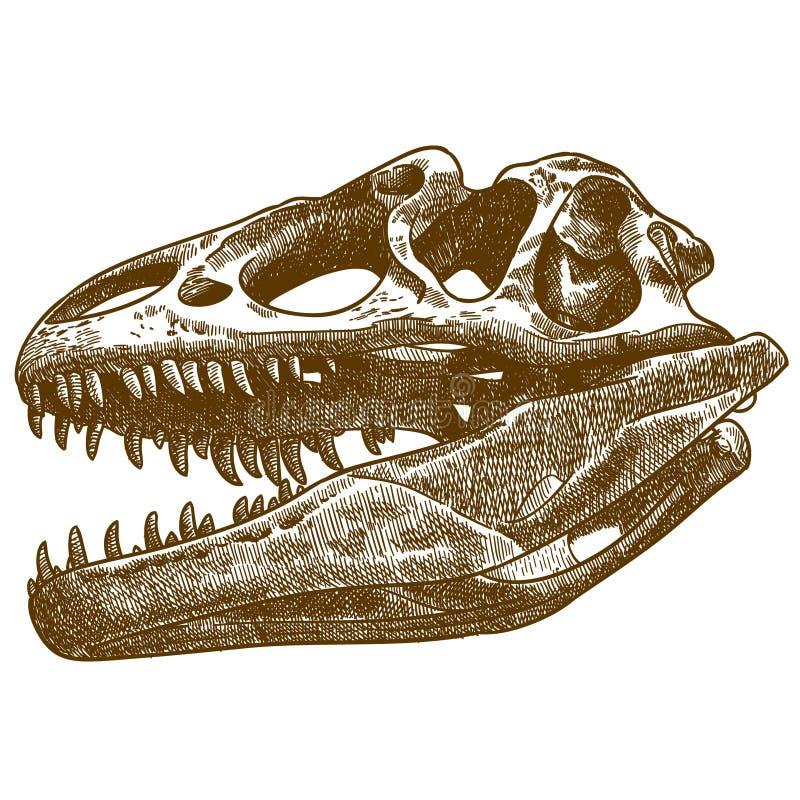 Engring illustration av tyrannosaurus skalle royaltyfri illustrationer