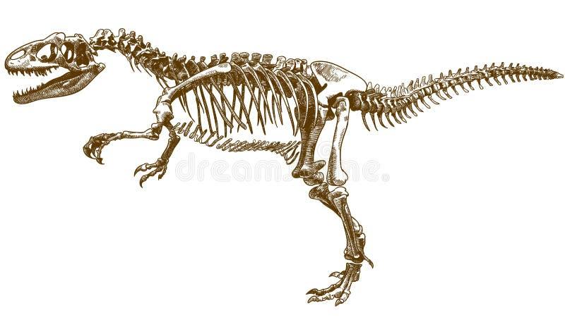 Engring illustration av tyrannosaurus skelett vektor illustrationer